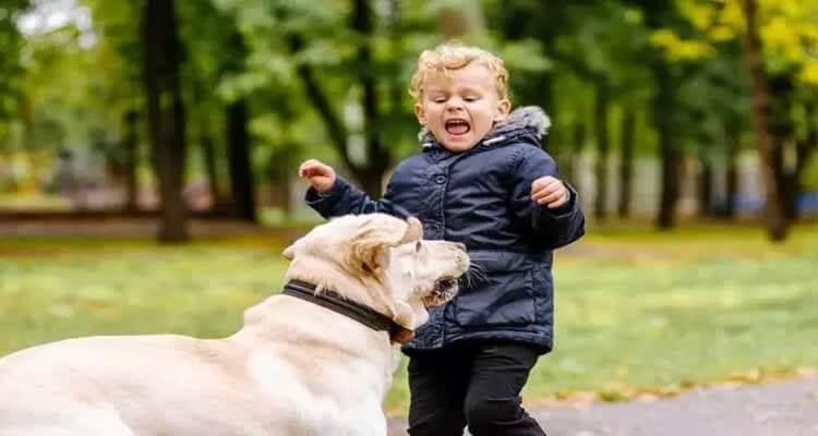 Ребенок испугался собаки