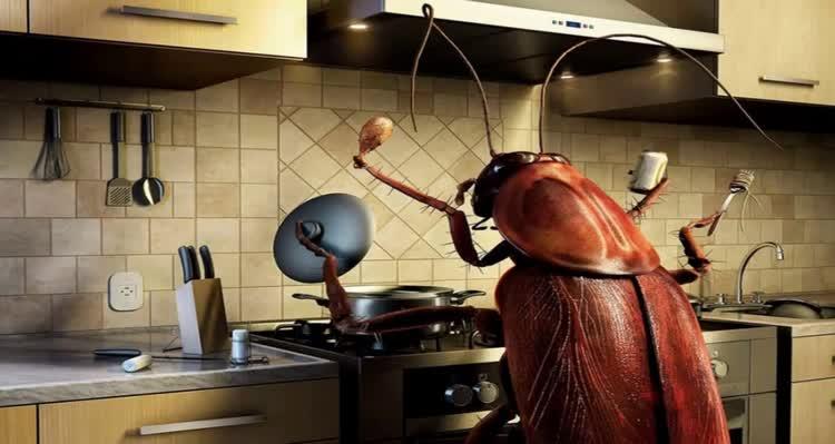 насекомое хозяйничает на кухне