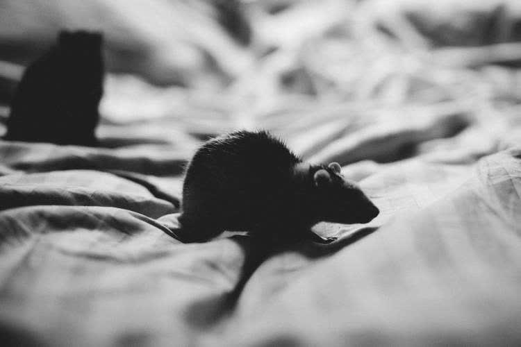 Мыши на матрасе